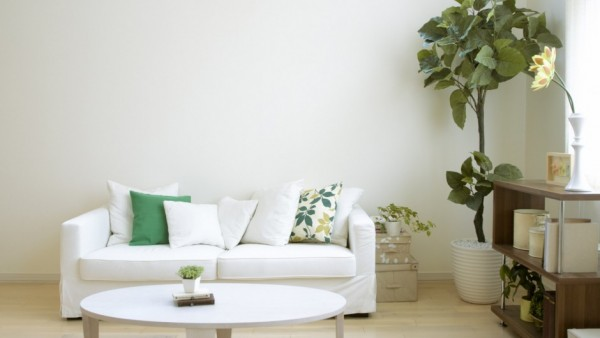 salón con plantas