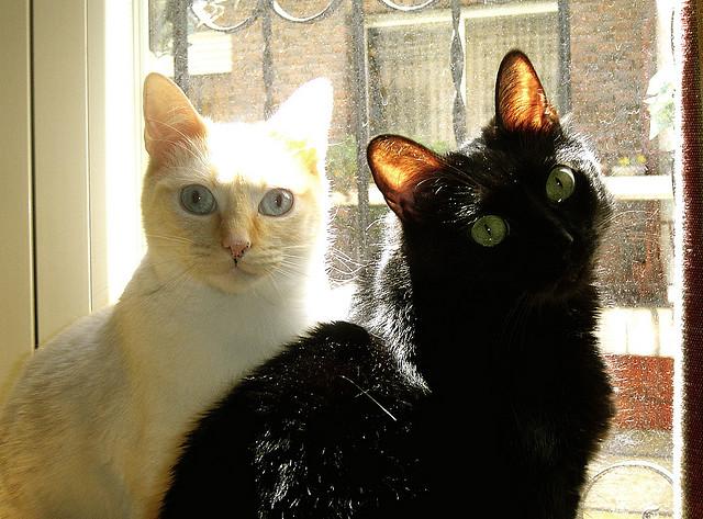 gatos al sol jorge correa